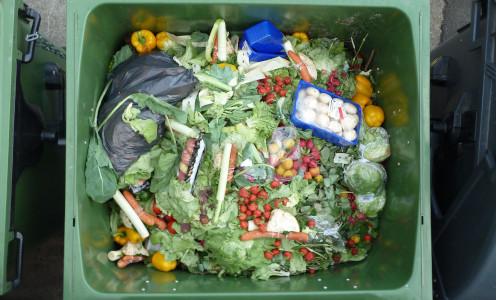 Food waste in a bin